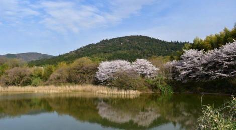今月の三輪山(会員)