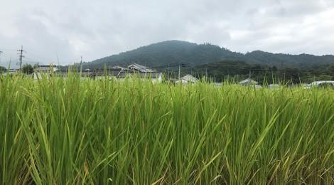 九月の三輪山