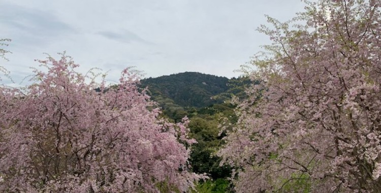 4月の三輪山