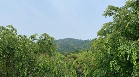 6月の三輪山